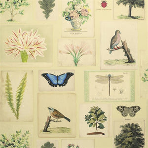 Flora And Fauna Parchment