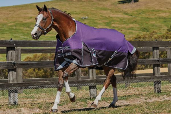 Weatherbeeta Comfitec Plus Dynamic Rug Medium-Lite