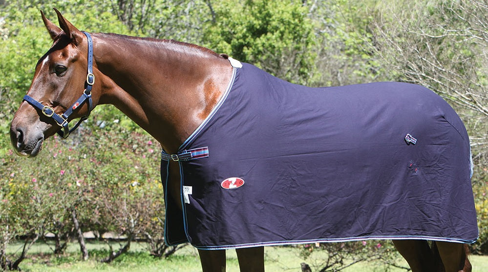Zilco Cotton Defender Dress Rug