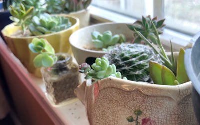 Beach Find Succulent Container Garden How-To Craft