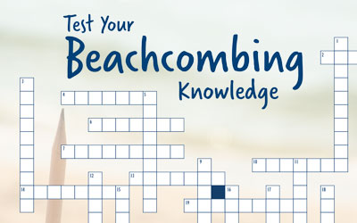 Test Your Beachcombing Knowledge