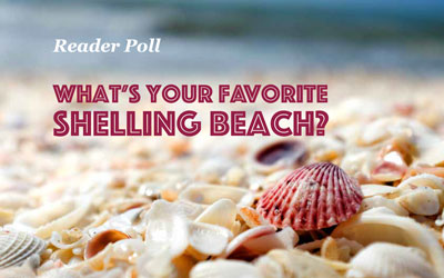 What's your Favorite Shelling Beach?