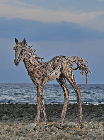 James Doran Webb Driftwood Foal on Beach