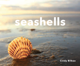 Seashells by Cindy Bilbao