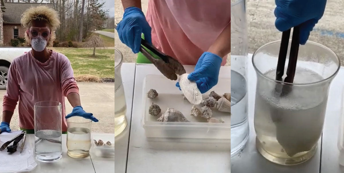 safety when cleaning seashells
