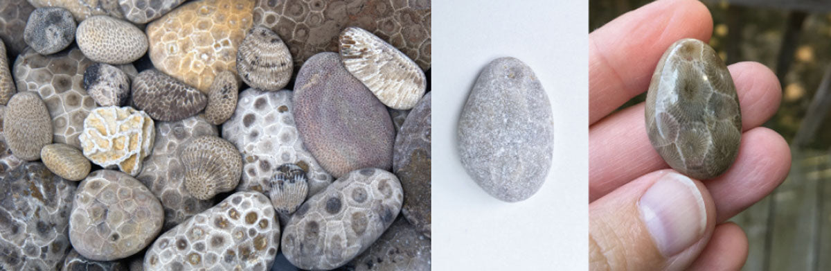 great lakes fossils and stones