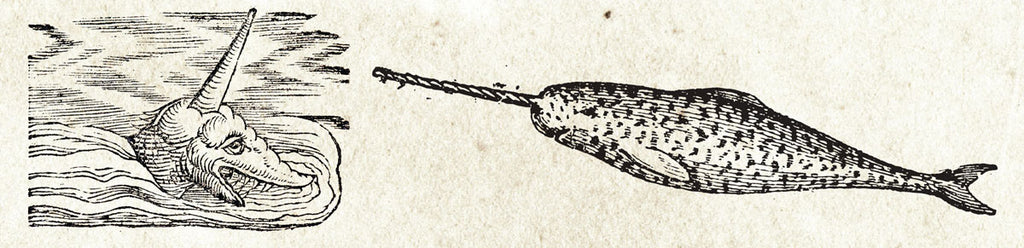 narwhal myhts
