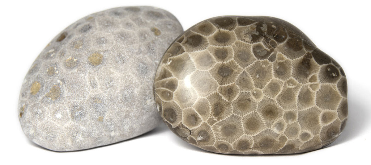 raw and polished petoskey stones