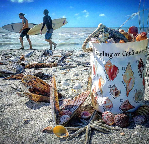 captiva shell collecting