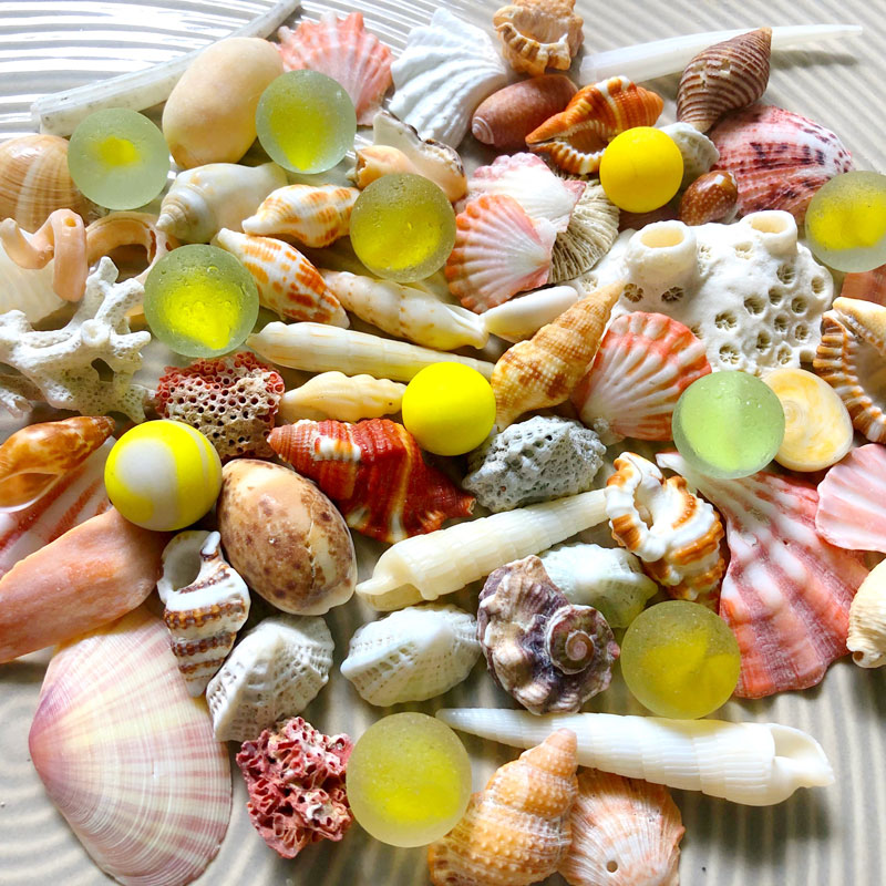 Beachcombing September/October 2020 Issue - PREORDER