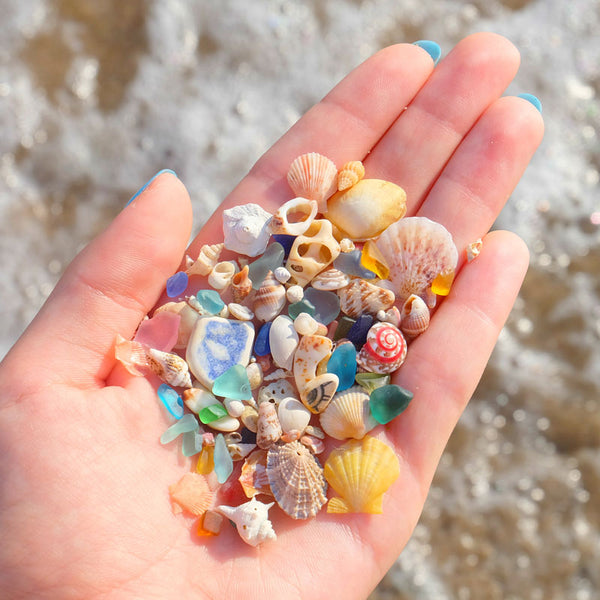 Beachcombing Volume 20: September/October 2020