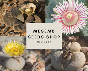 Mesemb Seeds Shop