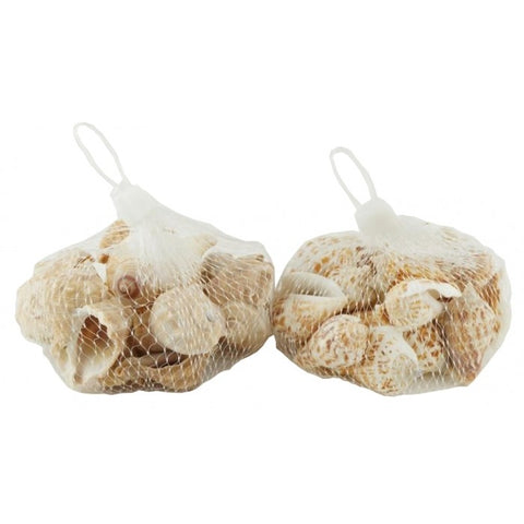 Assorted Sea Shells in bags - NS71