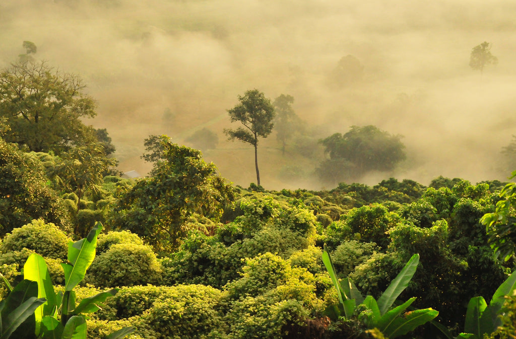 How Sustainable Companies Are Helping To Save Our Rain Forests -  By Tara Dodson