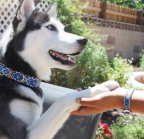 Mucky Pup- Dog Collar and matching Bracelet - Vegan - Feeds 4 shelter pups! - Give Back Goods