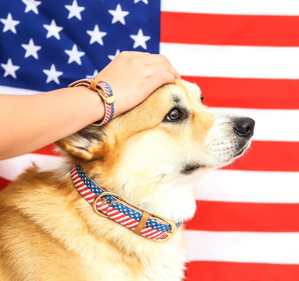 The Presidential Dog Collar and Matching Bracelet For You! - Vegan - Feeds 4 shelter pups!