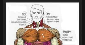 How to GROW your CHEST