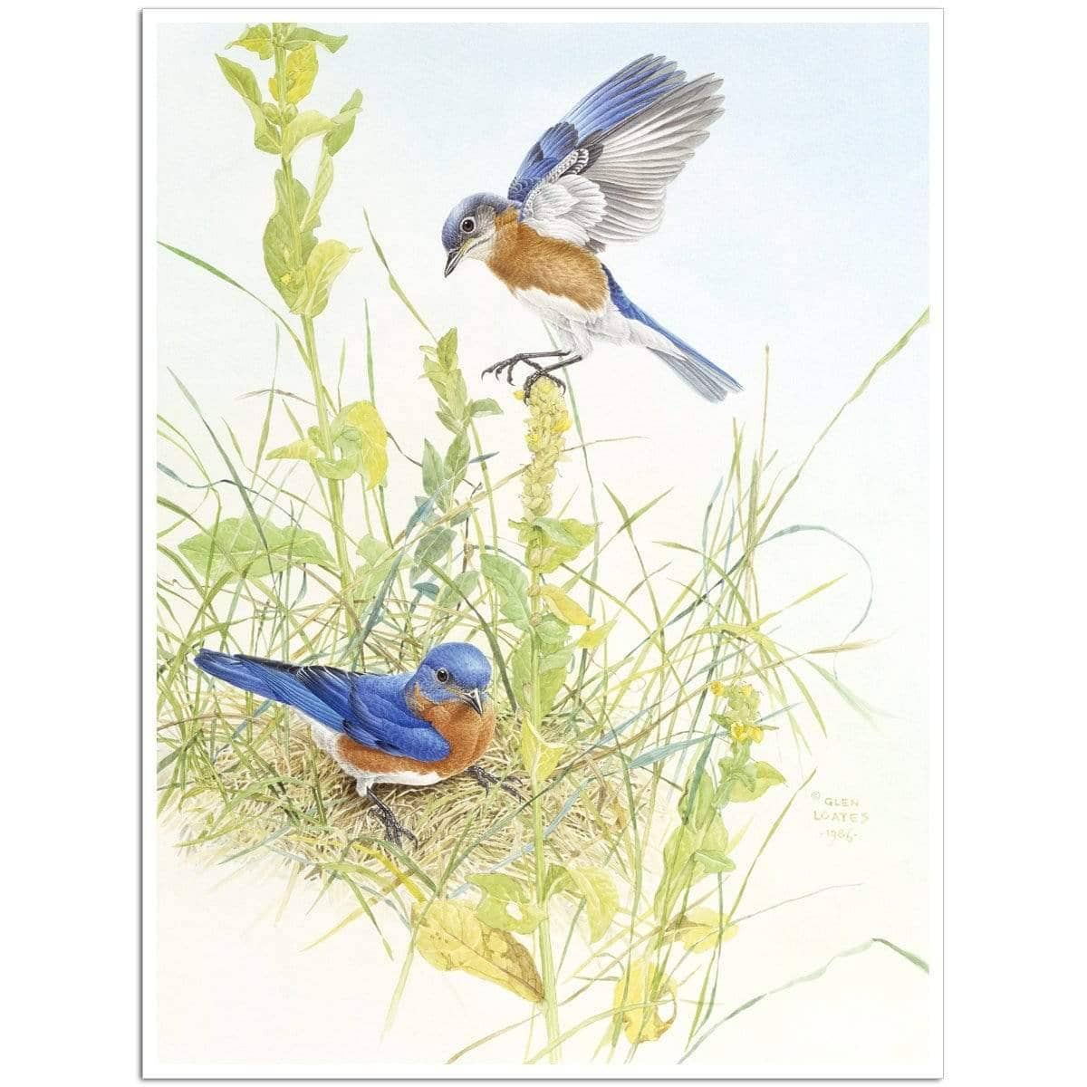 Bluebirds - Art Print