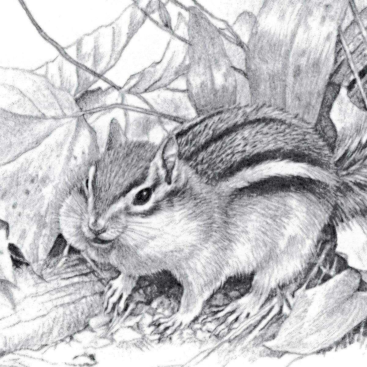 Chipmunk - Art Print