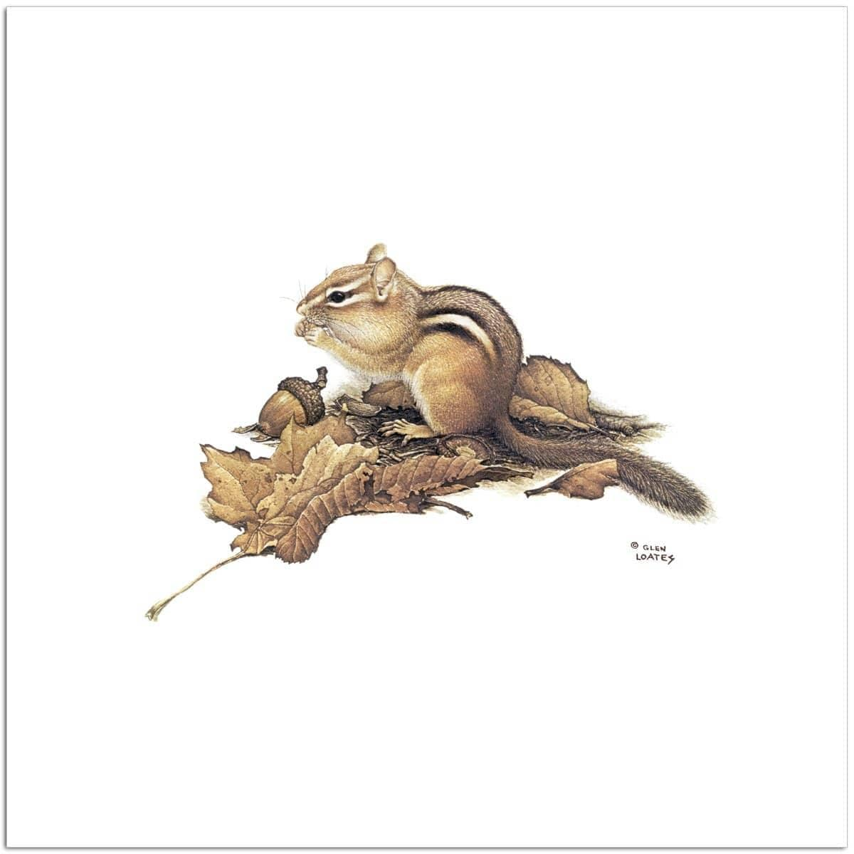 Chipmunk and Acorns - Art Print - The Official Glen Loates Store