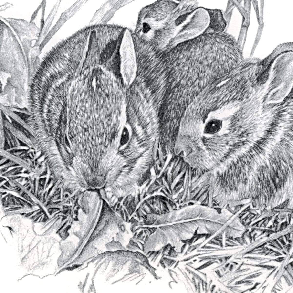 Eastern Cottontail Bunnies - Art Print