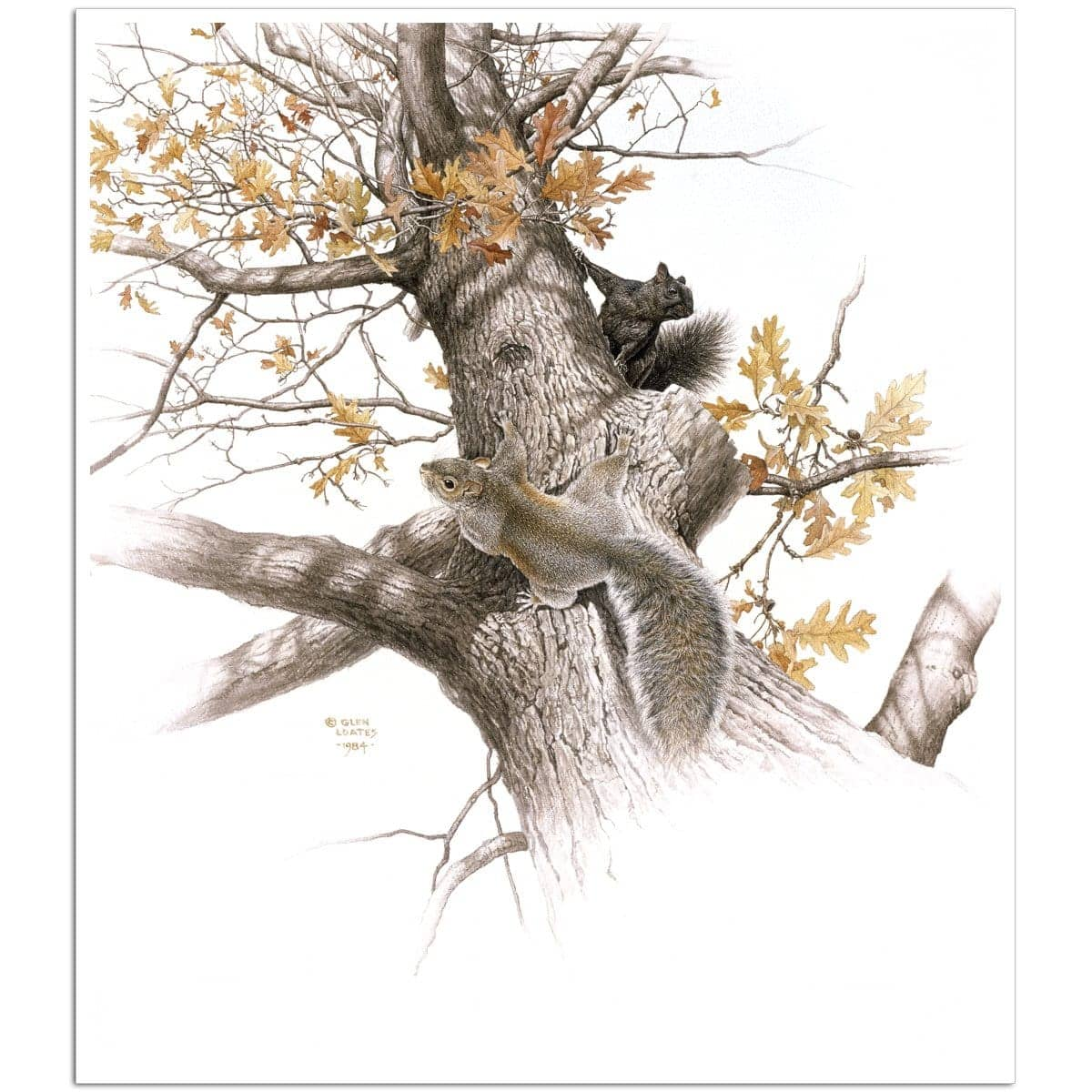 Eastern Gray Squirrels - Art Print