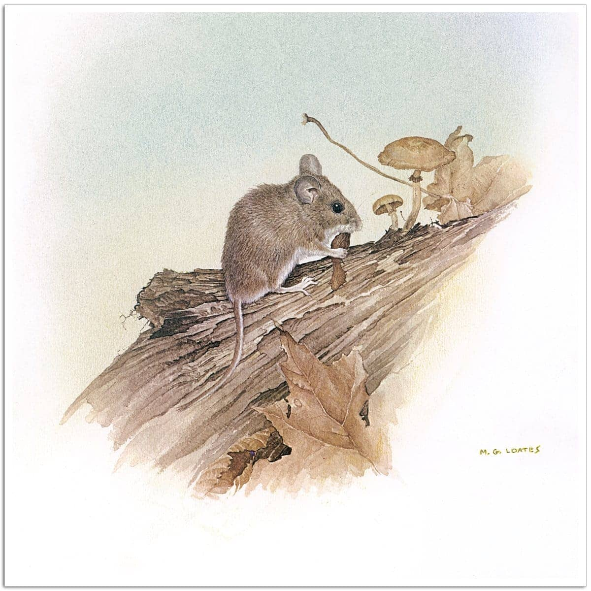 Field Mouse - Art Print