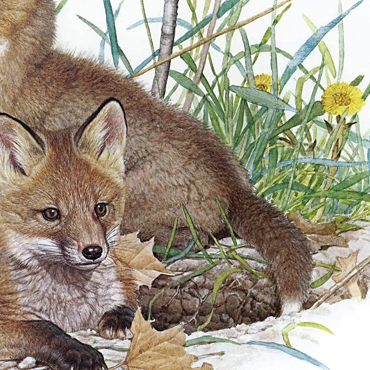 Fox Kits - Art Print