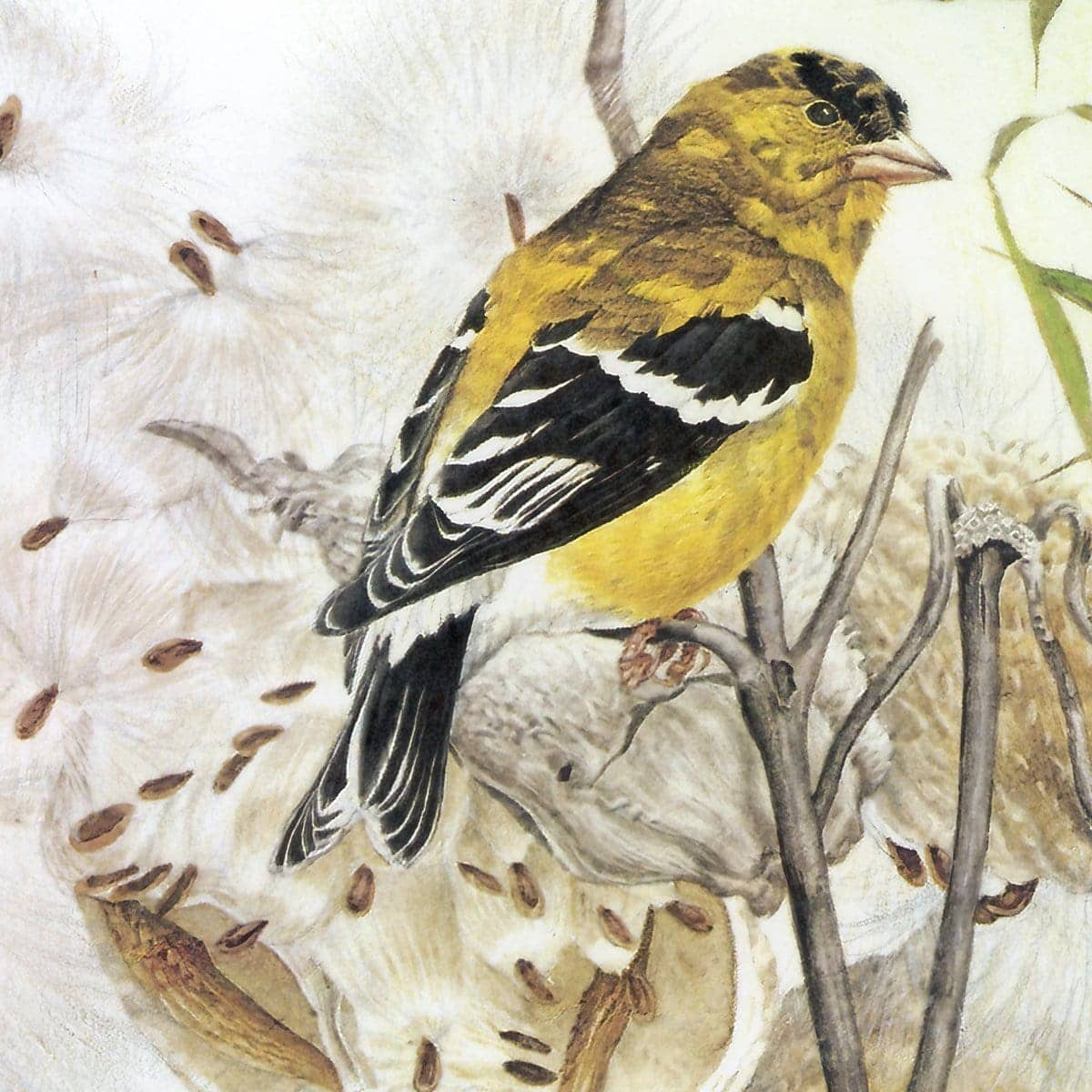 Goldfinches on Thistle - Art Print