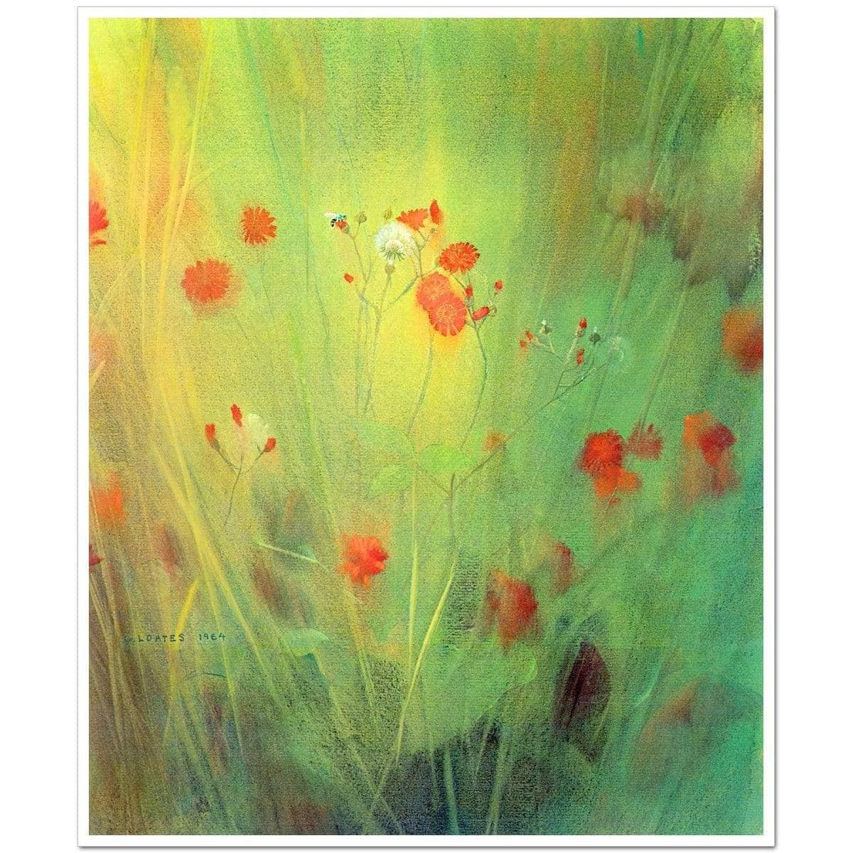 Hawkweed - Art Print | The Official Glen Loates Store