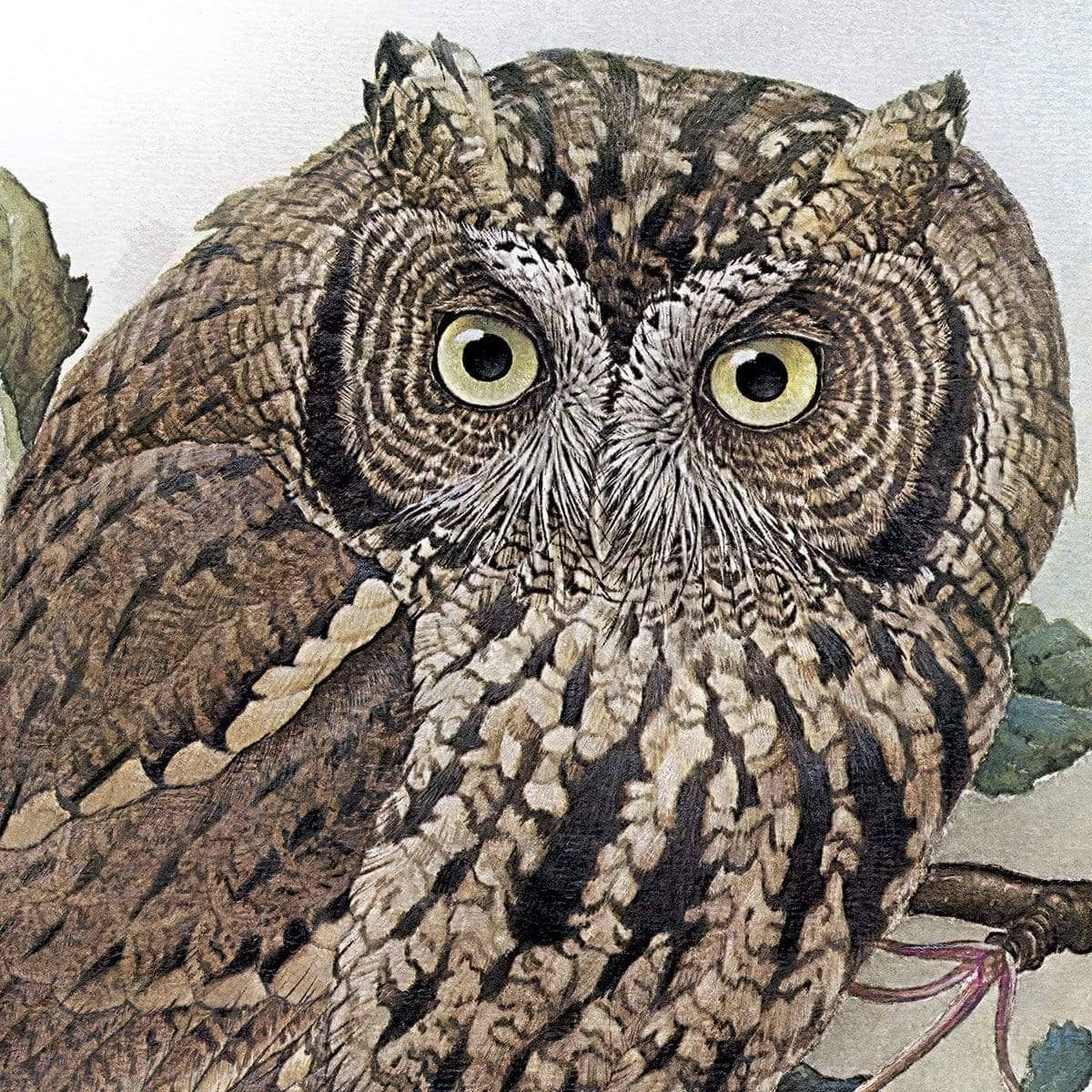 Screech Owl with Field Mouse - Art Print