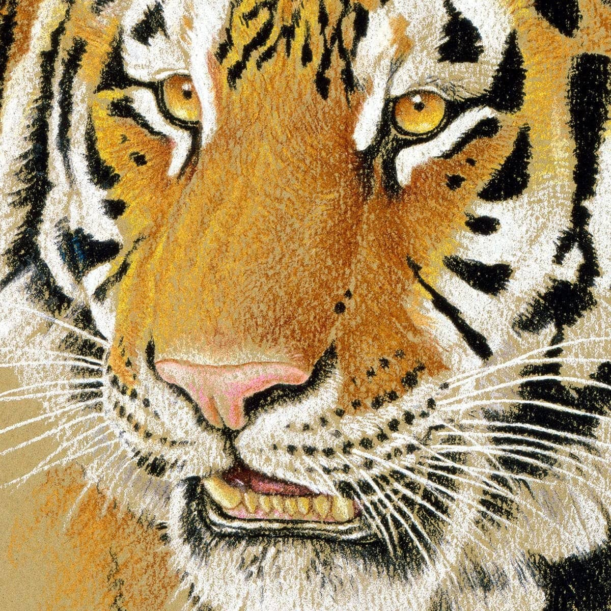Tiger Portrait - Canvas Print by Glen Loates from the Glen Loates Store