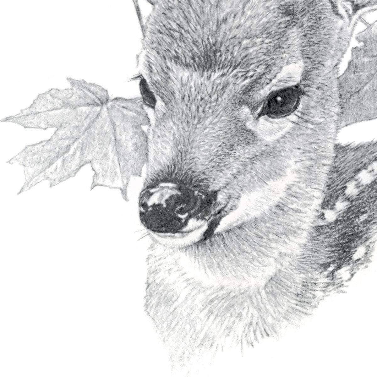 White Tailed Deer Fawn Portrait - Art Print