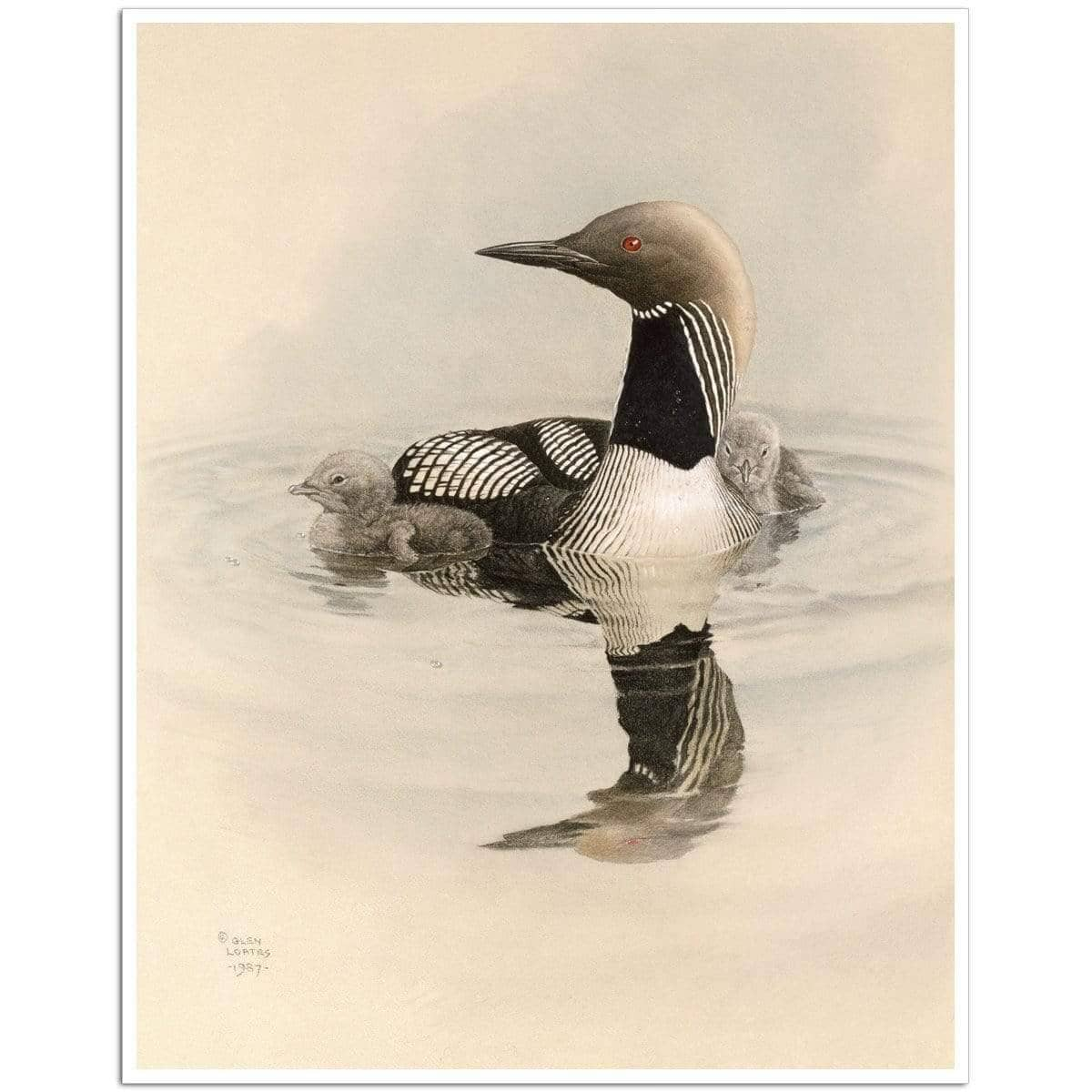 Arctic Loon With Young - Art Print by Glen Loates from the Glen Loates Store