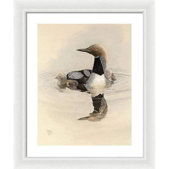 Arctic Loon With Young - Framed Print - The Official Glen Loates Store
