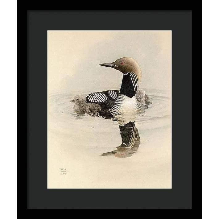 Arctic Loon With Young - Framed Print by Glen Loates from the Glen Loates Store