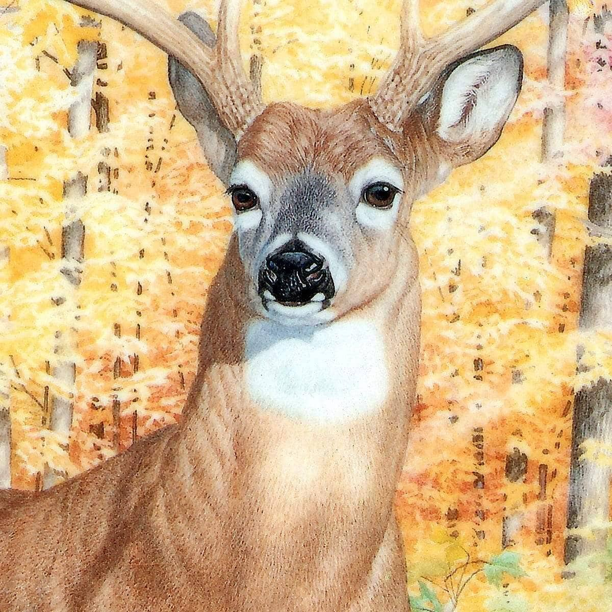 Autumn Deer - Art Print by Glen Loates from the Glen Loates Store