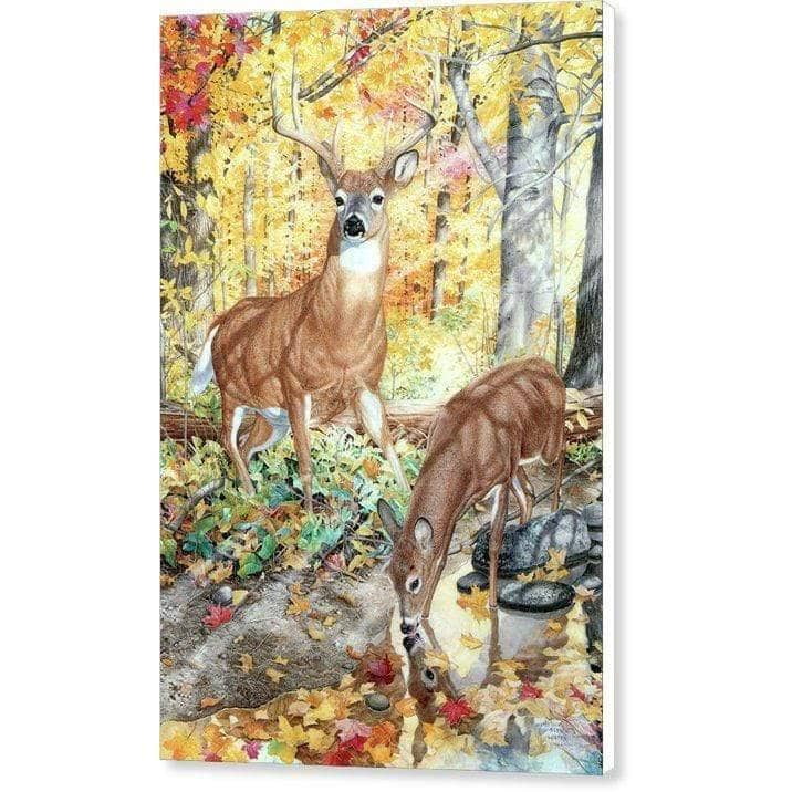 Autumn Deer - Canvas Print by Glen Loates from the Glen Loates Store