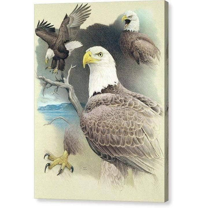Bald Eagle Montage - Canvas Print by Glen Loates from the Glen Loates Store