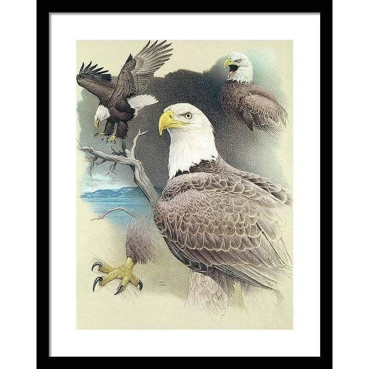 Bald Eagle Montage - Framed Print by Glen Loates from the Glen Loates Store