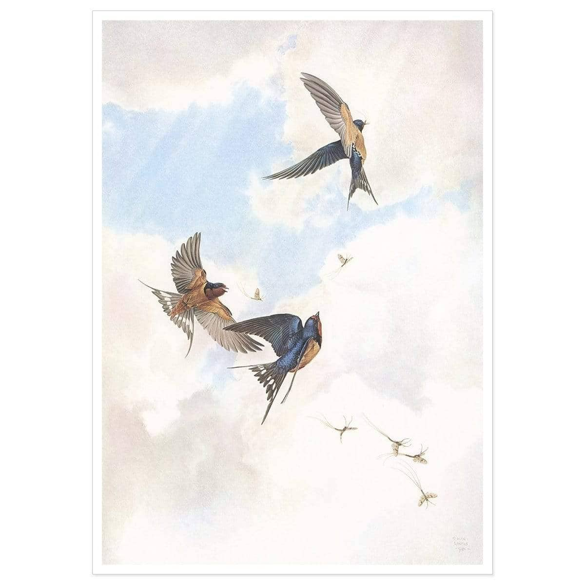 Barn Swallows - Art Print by Glen Loates from the Glen Loates Store