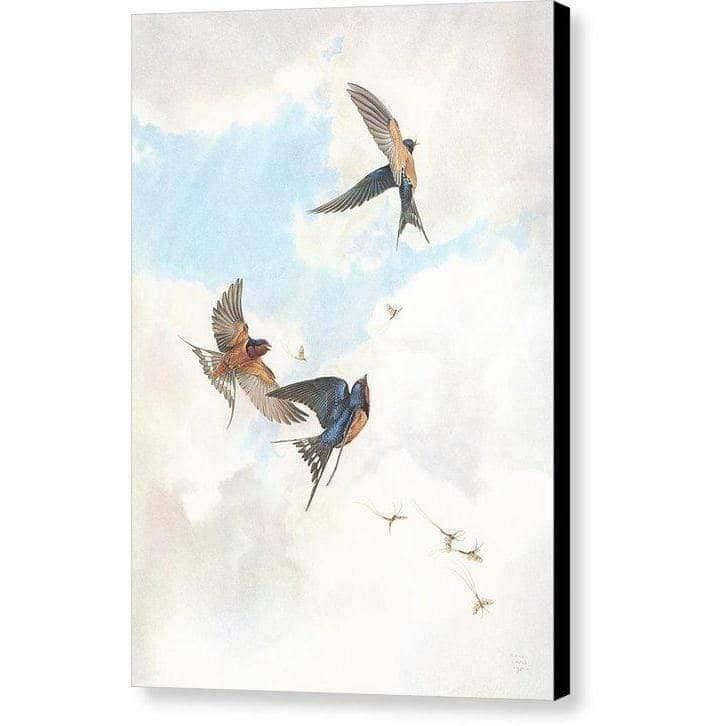 Barn Swallows - Canvas Print-Canvas Print-The Official Glen Loates Store