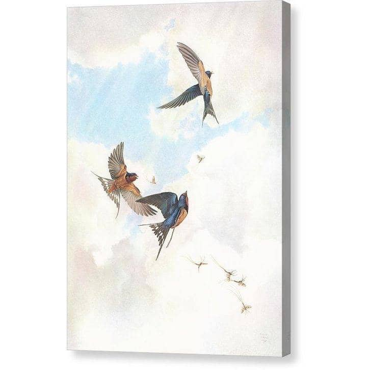 Barn Swallows - Canvas Print by Glen Loates from the Glen Loates Store