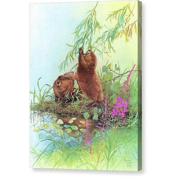 Beavers - Canvas Print