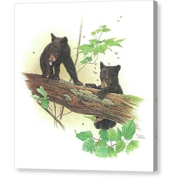 Black Bear Cubs - Canvas Print-Canvas Print-The Official Glen Loates Store