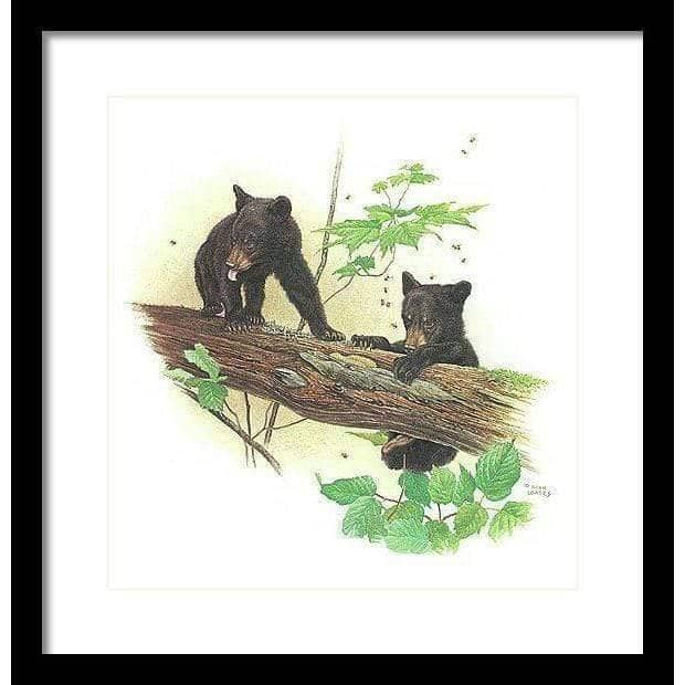 Black Bear Cubs - Framed Print by Glen Loates from the Glen Loates Store