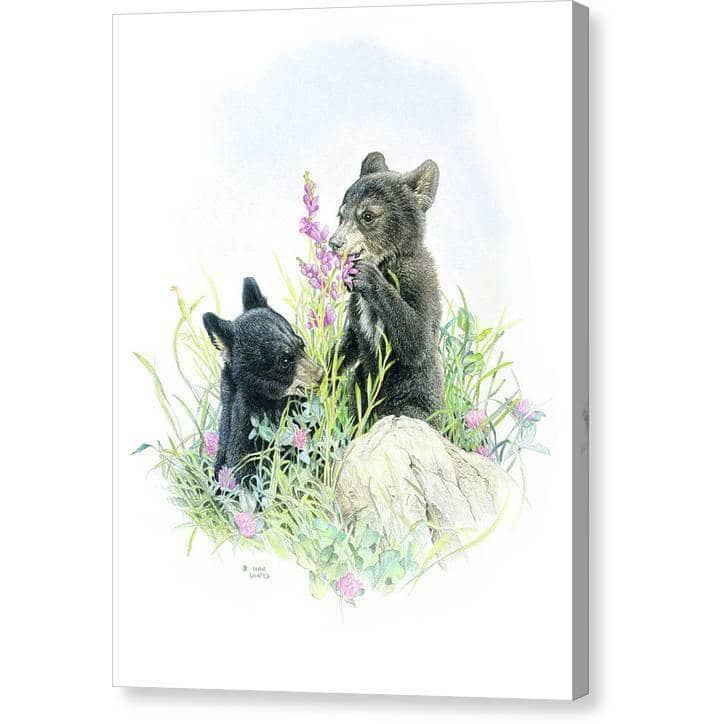 Black Bear Cubs in Grass - Canvas Print