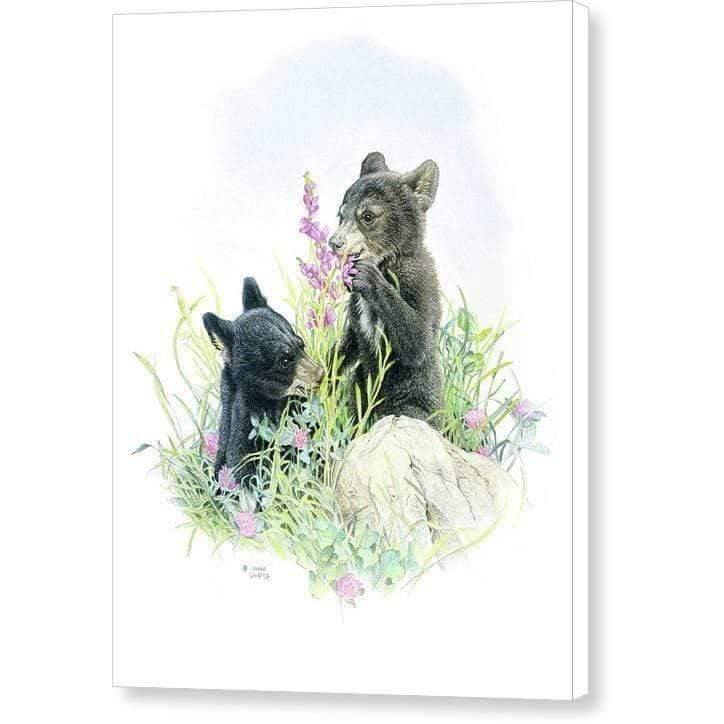 Black Bear Cubs in Grass - Canvas Print - The Official Glen Loates Store