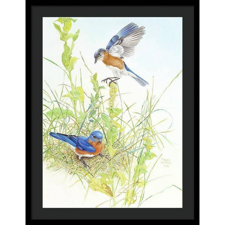 Bluebirds - Framed Print - The Official Glen Loates Store