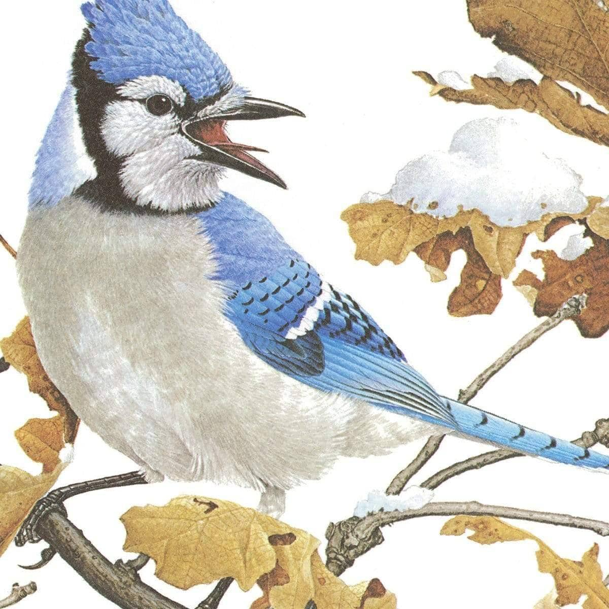 Blue Jays - Art Print - The Official Glen Loates Store
